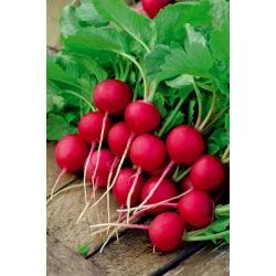 """Rábano """"Krasa"""" - NANO-GRO - aumenta el volumen de cosecha en un 30% -"""