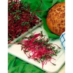 Microgreens - vörös cékla - egyedülállóan friss, friss ízű fiatal levelek -