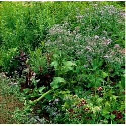 Трав'яний відбір медоносних однорічних рослин -