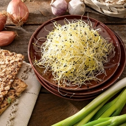 Sprouting seeds - Chives