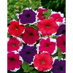 Κήπος πετούνια «Iluzja» (Illusion) - μείγμα χρωμάτων -