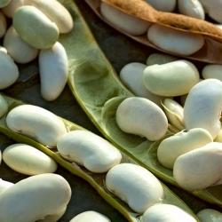 Bean Karo - untuk biji kering -