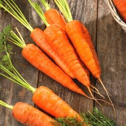 Carrot Fatima - pelbagai jenis akhir -