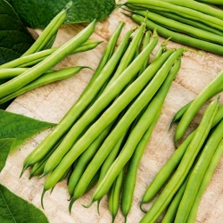 Dwarf green French bean Muza - a stringless variety