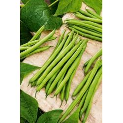 Νάνος πράσινο γαλλικό φασόλι Muza - μια ποικιλία χωρίς χορδές -
