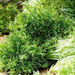 Leaf μουστάρδα Green Fire F1; καφέ μουστάρδα, κινεζική μουστάρδα, ινδική μουστάρδα, ανατολίτικη μουστάρδα -