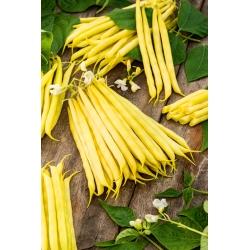 Fructidor kacang Perancis kerdil kuning -
