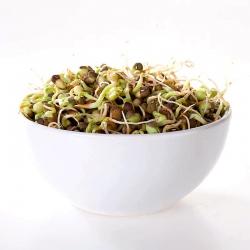 Biji berkecambah - Kacang hijau -