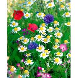 Suitsuvastane Flowery Meadow - sudu vähendavate õistaimede valik - 250 grammi -