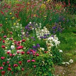 Eden Flowery Meadow - õistaimede segu: lai värvivalik - 250 grammi -