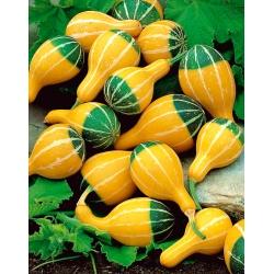 Ornamental squash Pear Bicolour