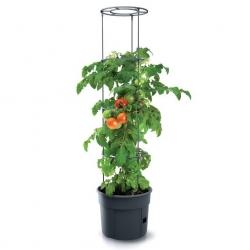 Tomātu audzēšanas pods ar mietiem - Tomātu audzētājs - ø 29,5 cm -