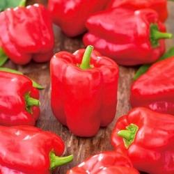 Red sweet bell pepper Ozarowska - COATED SEEDS