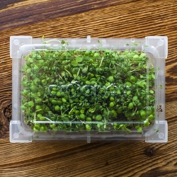 Sprouting tray - Green Mane