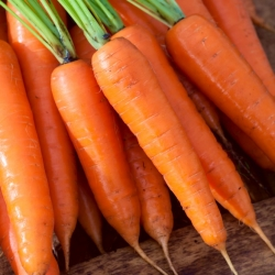 Zanahoria 'Aneta F1' - calibrada (1.8 - 2.0) 25000 semillas - semillas profesionales para todos -