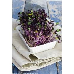 Семена для прорастания - Ростки, богатые витамином D - Набор из 3 частей + росток с 3 поддонами -  - семена