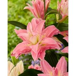 Двойная восточная лилия 'Roselily Patricia' - прекрасный аромат! -