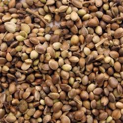 BIO Kanepi idanevad seemned - sertifitseeritud maheseemned -