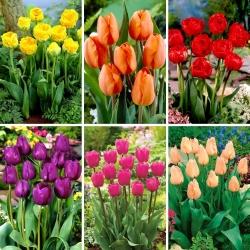 Juego de tamaño M: 30 bulbos de tulipán, selección de las 6 variedades más hermosas -