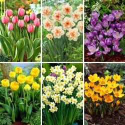 Juego de tamaño M: 40 bulbos de flores de primavera, selección de las 6 variedades más hermosas -