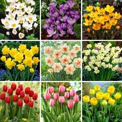 Juego de tamaño L: 60 bulbos de flores de primavera, selección de las 9 variedades más hermosas -