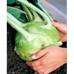 Nuikapsas - Gigant - 100 seemned - Brassica oleracea var. Gongylodes L.