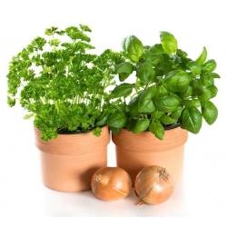 Hạt húng quế ngọt - Ocimum basilicum - 650 hạt