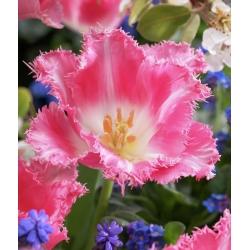 Тюльпан Fancy Frills - пакет из 5 штук - Tulipa Fancy Frills