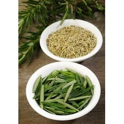Hạt giống hương thảo - Rosmarinus officinalis - 80 hạt giống