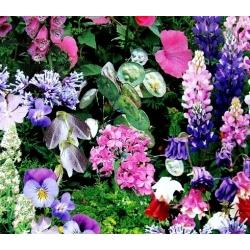 Shade Loving Plants mixed seeds