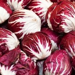 Chicory Palla Rossa 3 seeds - Cichorium intybus - 360 seeds