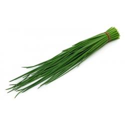 الثوم المعمر Wulkan البذور - الآليوم schoenoprasum - 850 البذور - Allium schoenoprasum L. - ابذرة