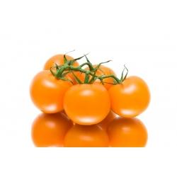 Tomato Joke seeds - Lycopersicon esculentum - 65 seeds