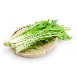 Mizuna, semillas de mostaza japonesa - Brassica rapa nipposinica - 1000 semillas - Brassica rapa var. Japonica