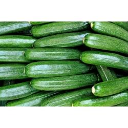 Courgette, Zucchini Astra Polka seeds - Cucurbita pepo - 21 seeds