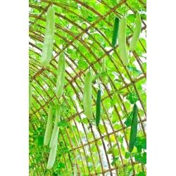 Лагенария обыкновенная - Snake - 24 семена - Lagenaria siceraria
