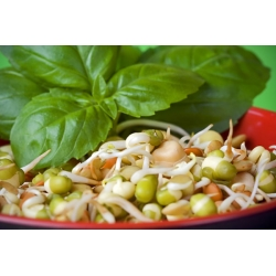Hot Sprout Mix