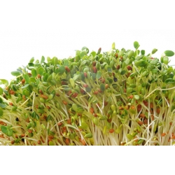French Sprout mix