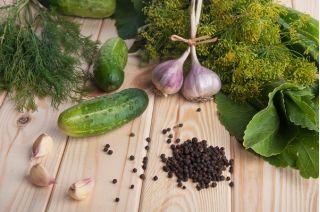 """Cucumber """"Sremski"""" - no. 1 bestselling hit in Poland - COATED SEEDS - 50 seeds"""