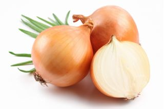 "Onion ""Ailsa Craig"" - giant bulbs - COATED SEEDS - 200 seeds"