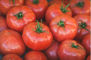 """Tomato """"Tolek"""" - large fruit, can be peeled without blanching"""