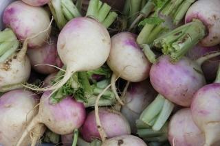 Fodder turnip 'Rogowska' - 500 g