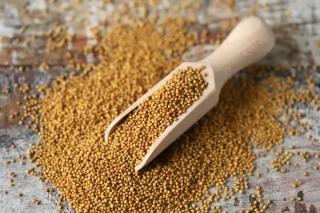 White fodder mustard - 1 kg