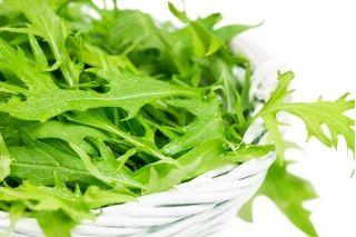 Mizuna, Japanese Mustard seeds - Brassica rapa nipposinica - 1000 seeds