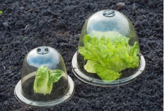 Mini greenhouse - dome - protects plants from sudden, unexpected frosts - 33 x 30.5 cm - 3 pieces
