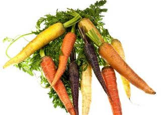 Carrot - multicolour variety mix - COATED SEEDS - 400 seeds