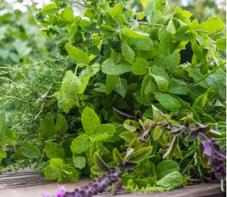 Herb Garden for Many Years - Herb mix