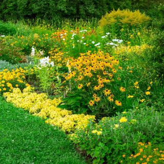 Yellow Plants mixed seeds