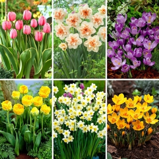 M-sized set - 40 spring flower bulbs, selection of 6 most beautiful varieties
