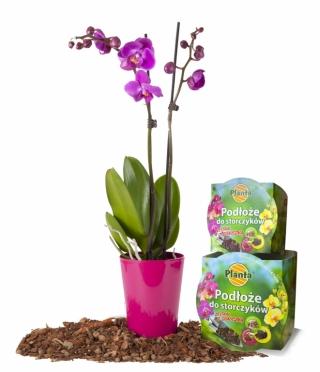 Orchid soil with a pot - Planta - 12 cm